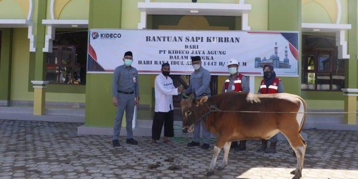 Presiden Direktur Kideco, M.Kurnia Ariawan serahkan bantuan Sapi Kurban kepada pengurus Masjid Al-Fath Desa Batu Kajang. Foto : HO.