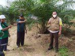 Djoko Bawono, Kepala Dinas Perkebunan dan Peternakan (Disbunnak) Paser, saat melakukan peninjauan lokasi peremajaan Kelapa Sawit yang ada di Kabupaten Paser, Kalimantan Timur. Rabu (28/7/2021).